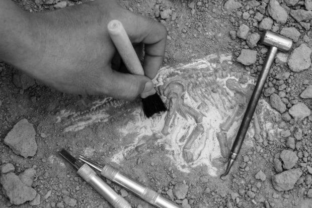 Skeleton and archaeological tools.Training for dig fossil.Simula